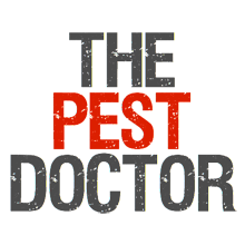 The Pest Doctor | Pest Control Southampton - CALL 07502 002042